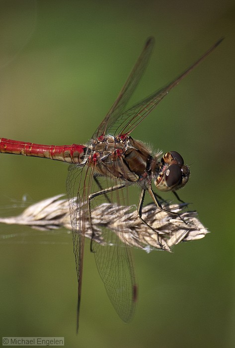 images/dragonfly_std.jpg