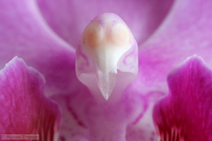 images/orchid2_std.jpg